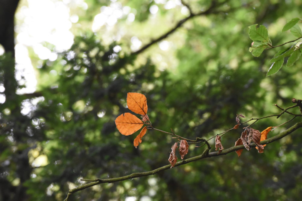4 things to do this Autumn at Monkey Forest - Monkey Forest