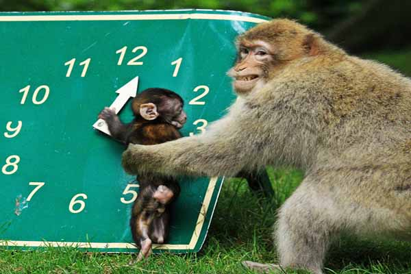 Trentham monkey forest ste britzwitle fb sciox Images