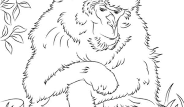 Barbary macaque colouring sheet JPEG