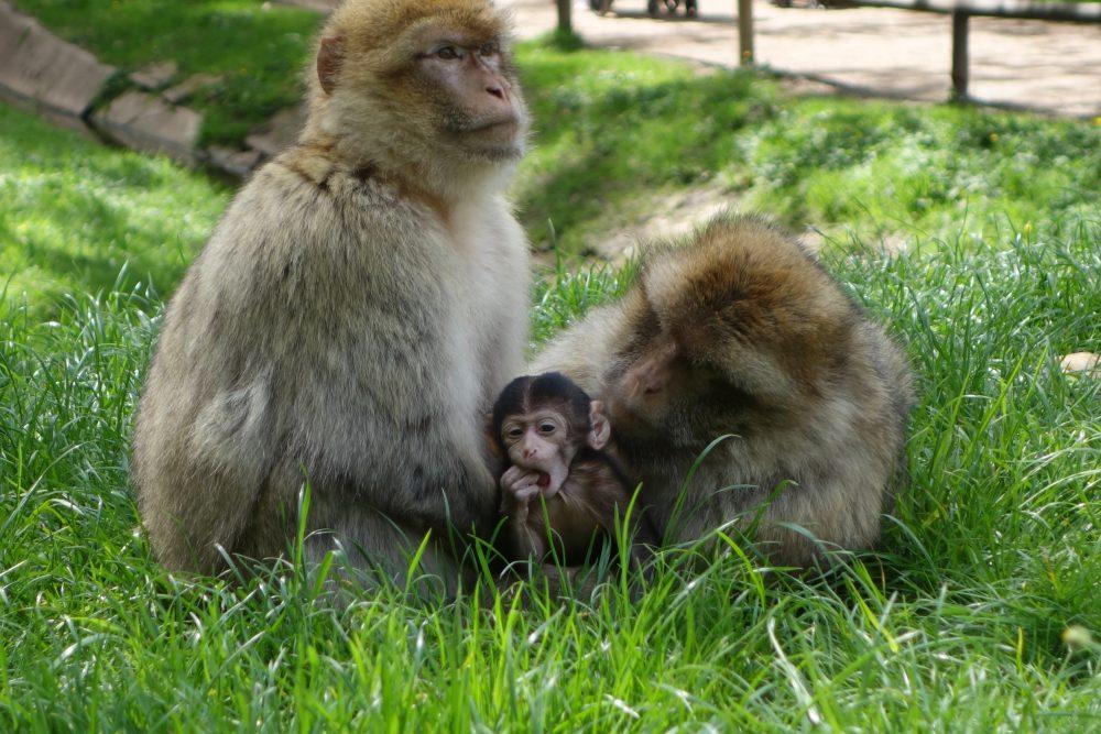 Baby monkey exploring