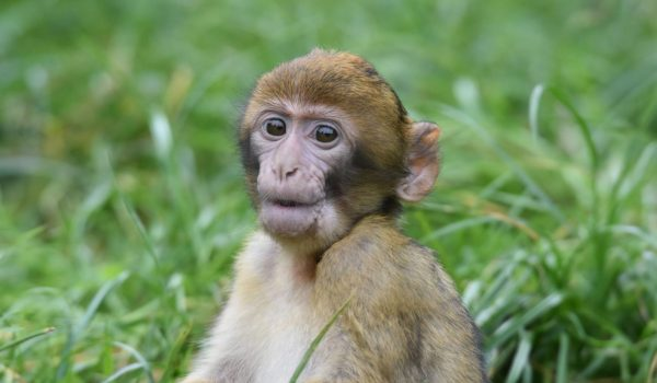 FOR THE 31ST OCTOBER ONLY,  KIDS CAN ENTER MONKEY FOREST FOR FREE IF IN FANCY DRESS.   AS WE FIND IT SPOOKY HOW FAST THE LITTLE ONES HAVE GROWN UP!  CLICK THE IMAGE TO READ MORE...