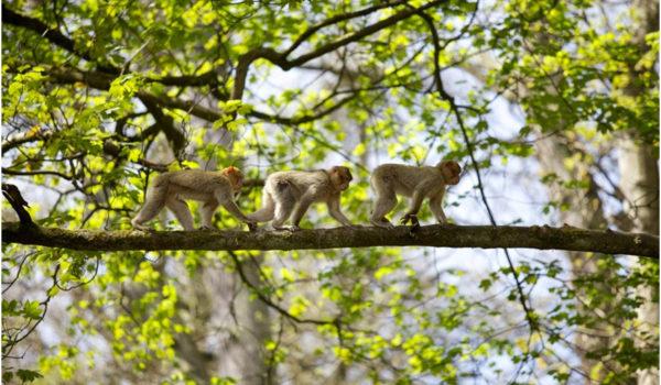 Follow Monkey Forest on twitter