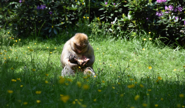 The forest is thrilled to have welcomed 5 baby monkeys into the world. Visitors are encouraged to come see the bundles of joy explore their new world