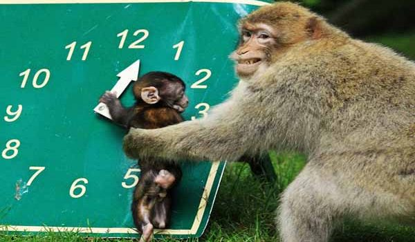 Baby monkey looking at opening times