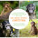 Baby Monkey Moments COMPETITION – T&Cs