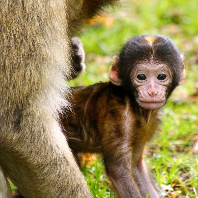 See the baby monkeys at Monkey Forest