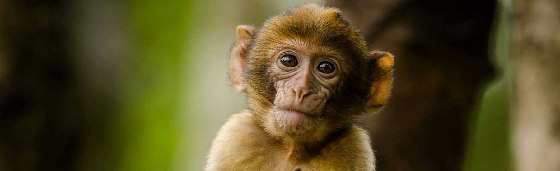 Monkey Forest Closed for Foreseeable