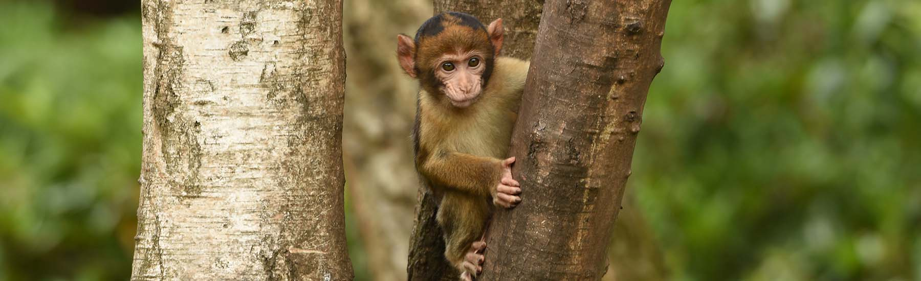 No Trick or Treating This Year? Enter Monkey Forest's Fancy Dress Competition Instead.