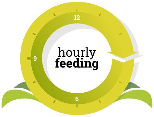 hourly-feeding