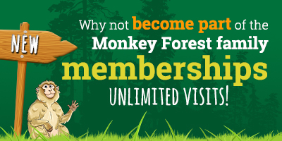 Annual Memberships