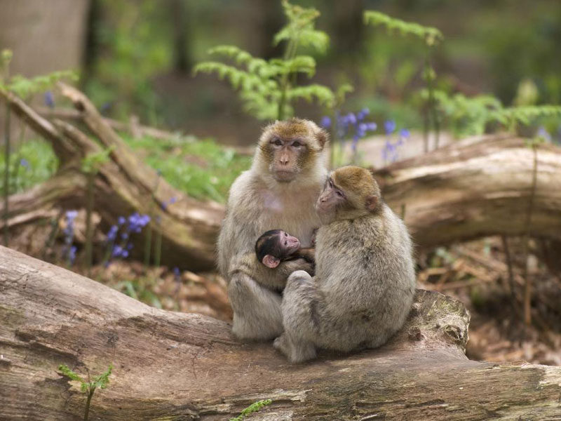 Baby monkeys at Trentham Monkey Forest
