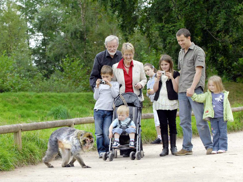 Perfect family day out in Staffordshire