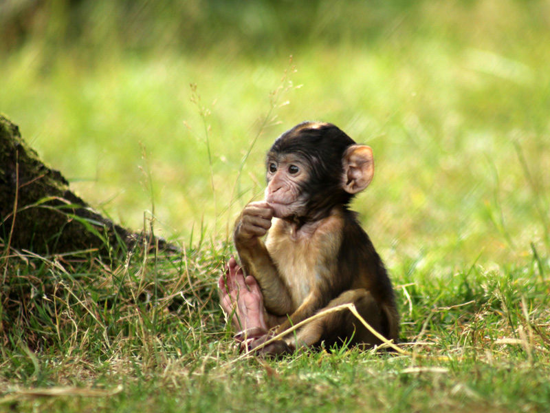 See the babies at Monkey Forest