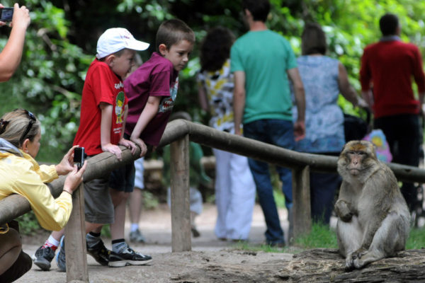 A great day out for all the family monkey forest