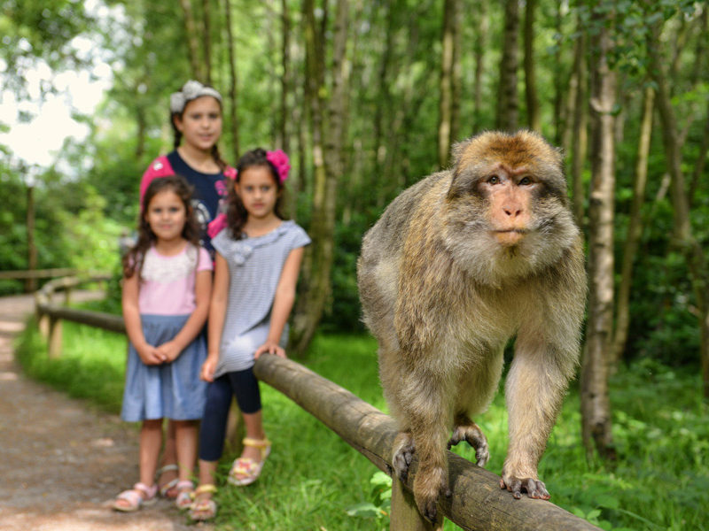 Walk with monkeys at Monkey Forest