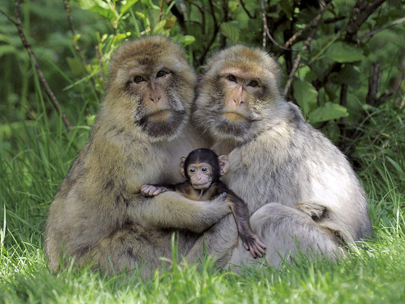 Group of monkeys