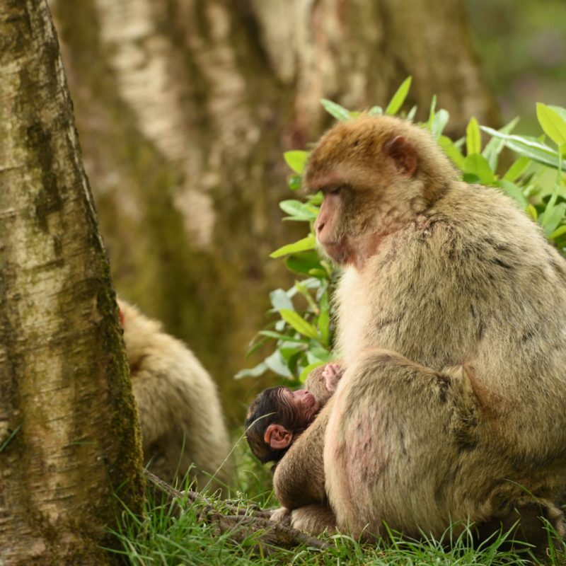 New arrivals at Monkey Forest