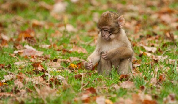 A Great Day Out For All The Family - Trentham Monkey Forest